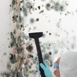 Black-Mold-Remediation-Olympia