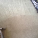 Carpet-Cleaning-Olympia