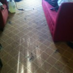 Olympia-Carpet-Clean-before