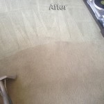 Olympia-Carpet-Cleaning-Company