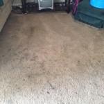 Olympia-Dirty-Carpet