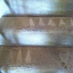 Olympia-Stairs-Carpet-Cleaning
