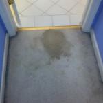Olympia-Vomit-1-before-carpet