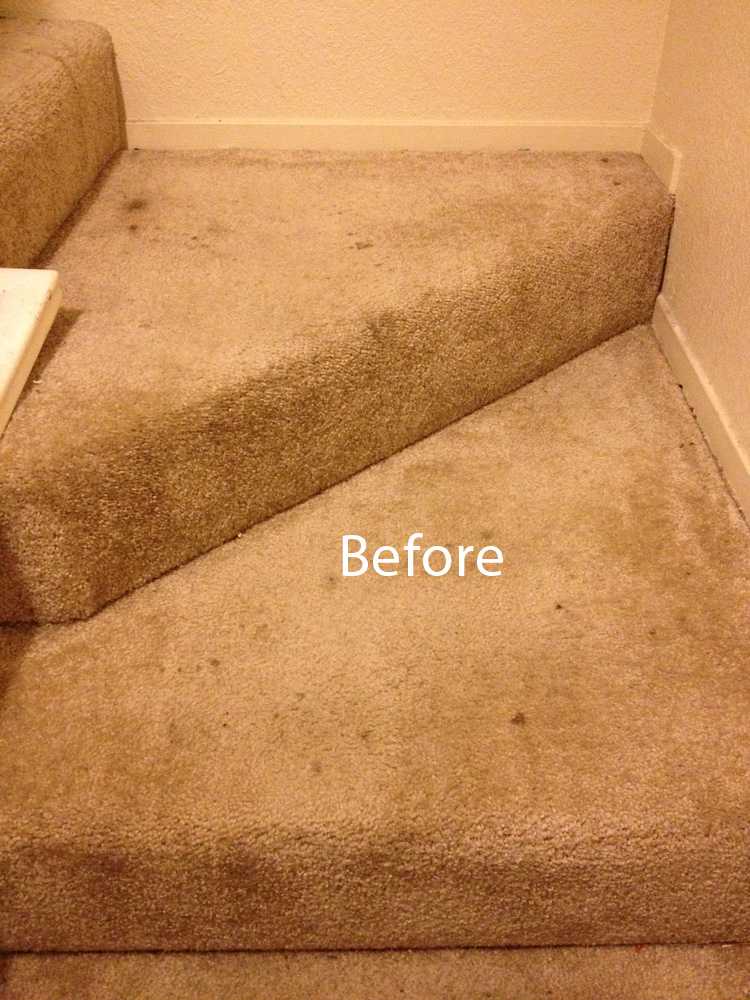 ... Stairs-Carpet-Cleaning-Olympia-A ...